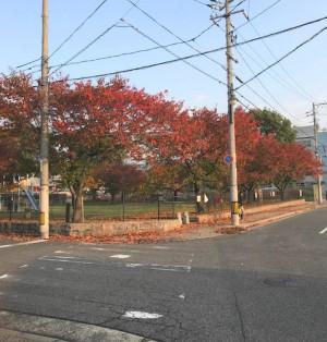秋の朝日に照る街もみじ